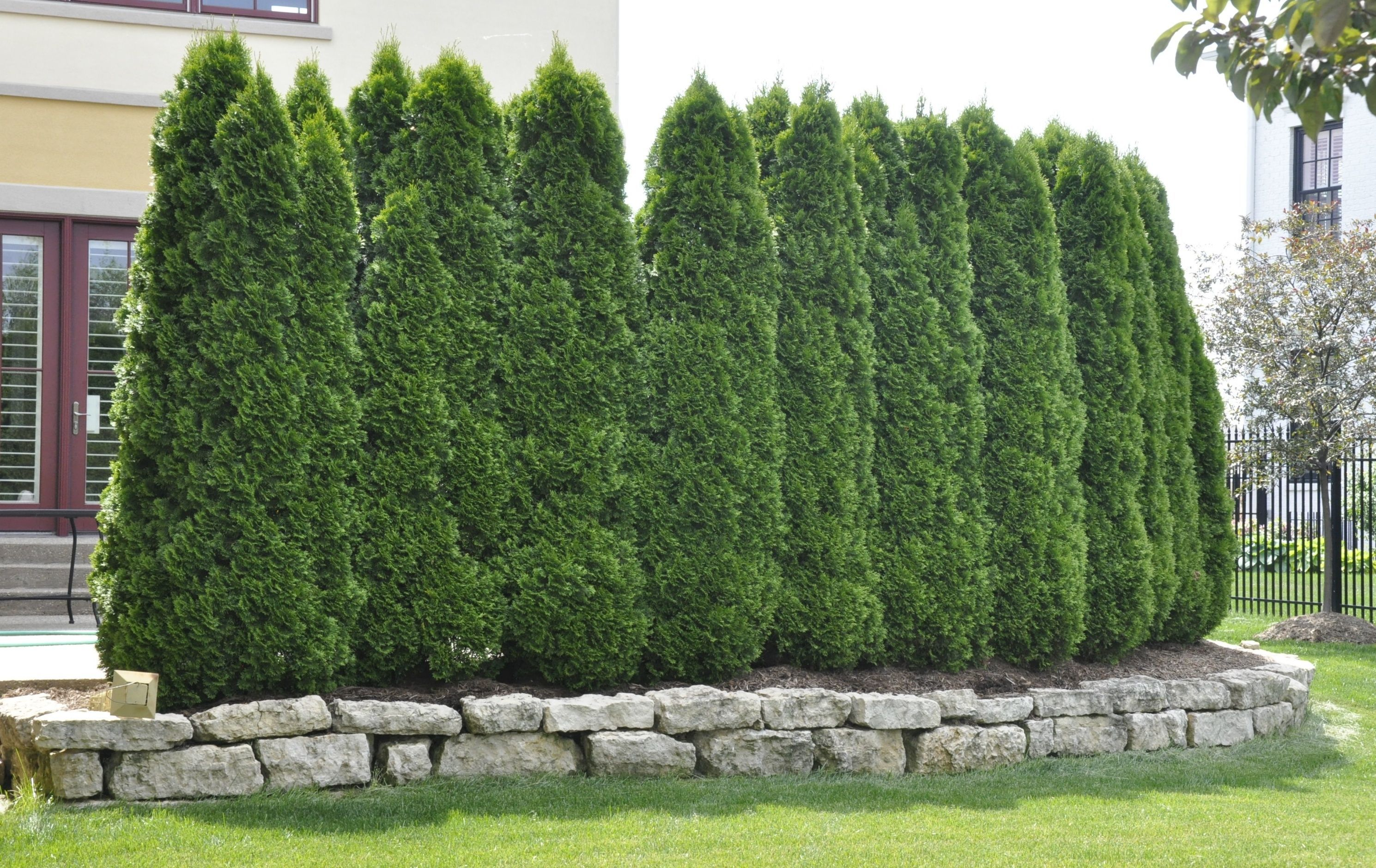 Natural Cypress Tree Fencing Ideas