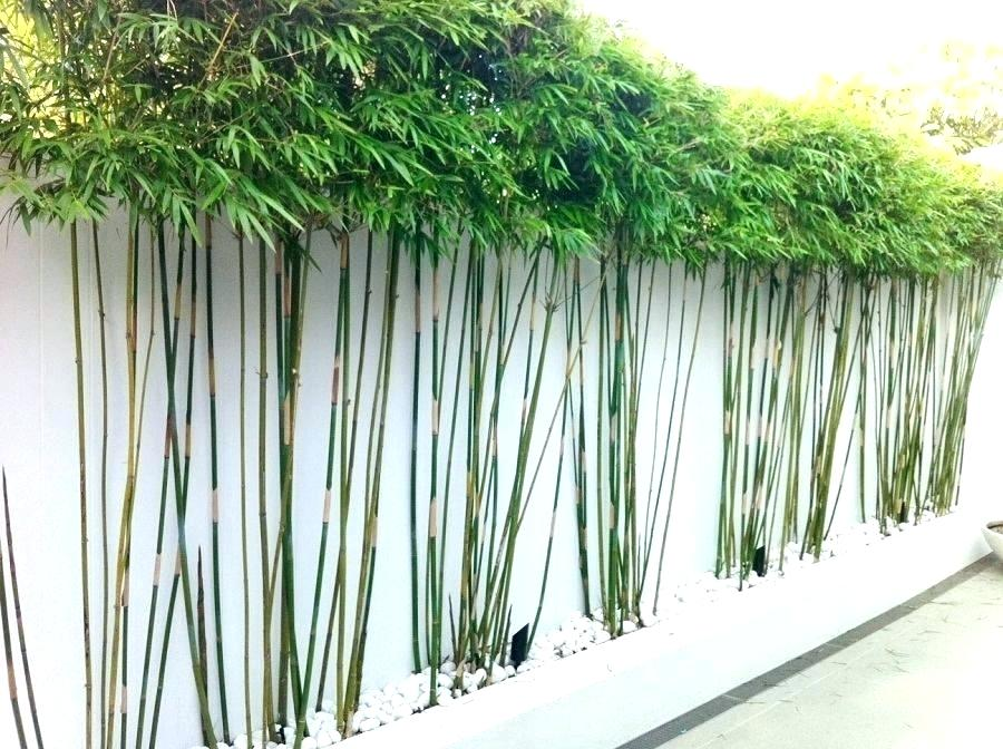 Design Poolside Bamboo Fence