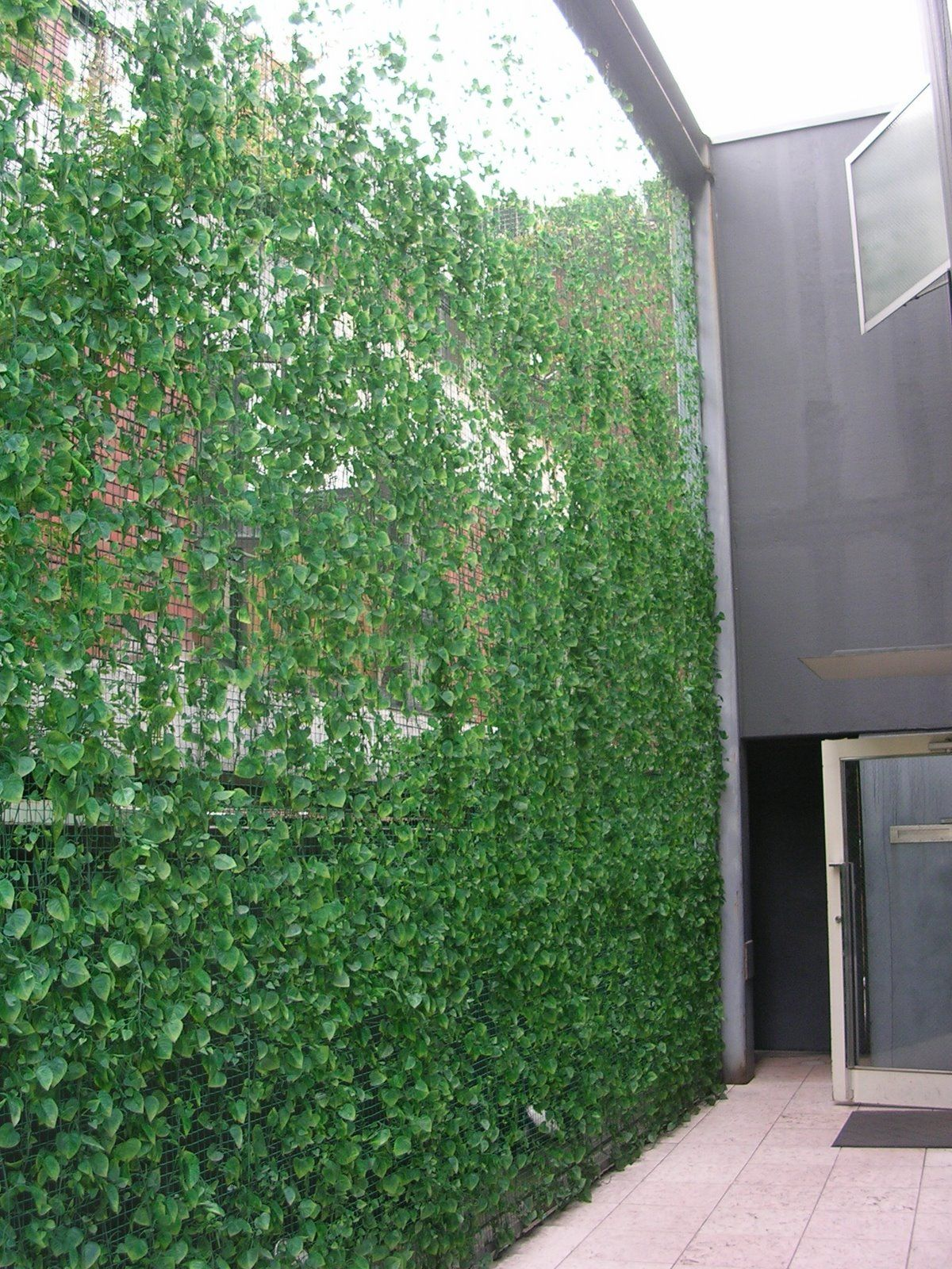Design Vertical Garden for Privacy Fence