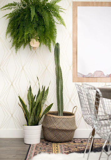 indoor wall hanging pot plants