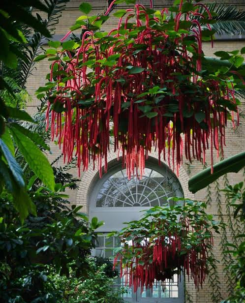 red indoor hanging plants