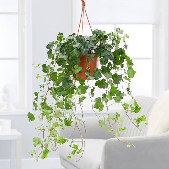 indoor hanging succulent plants