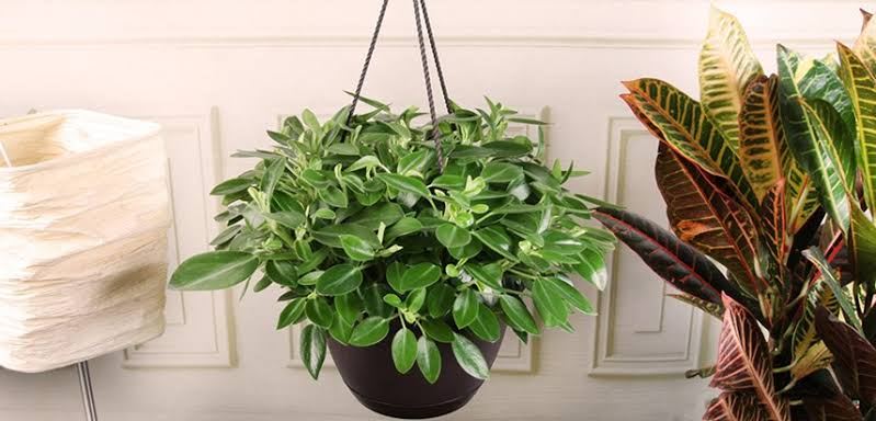 unusual indoor hanging plants
