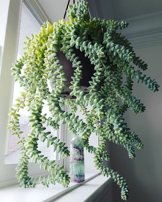 real indoor hanging plants uk