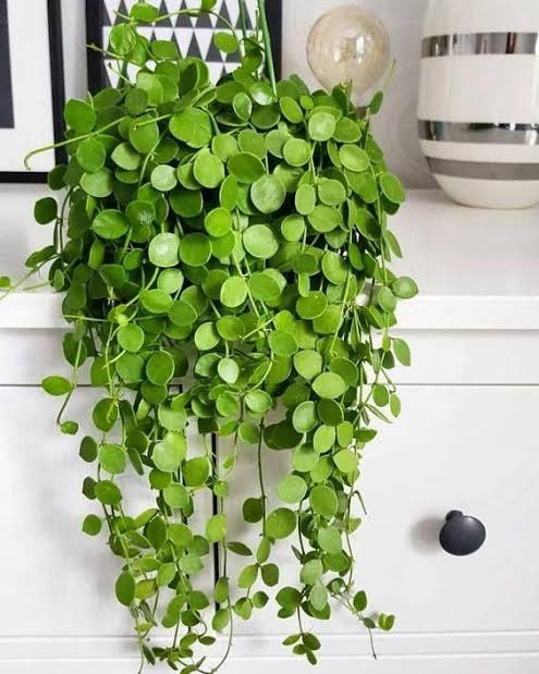 hanging indoor wall baskets