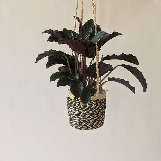 unique indoor hanging plants